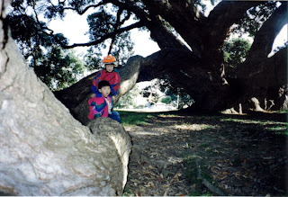 [Tree+(2).jpg]