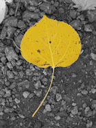 Aspen Leaf, C-Springs, October 2006