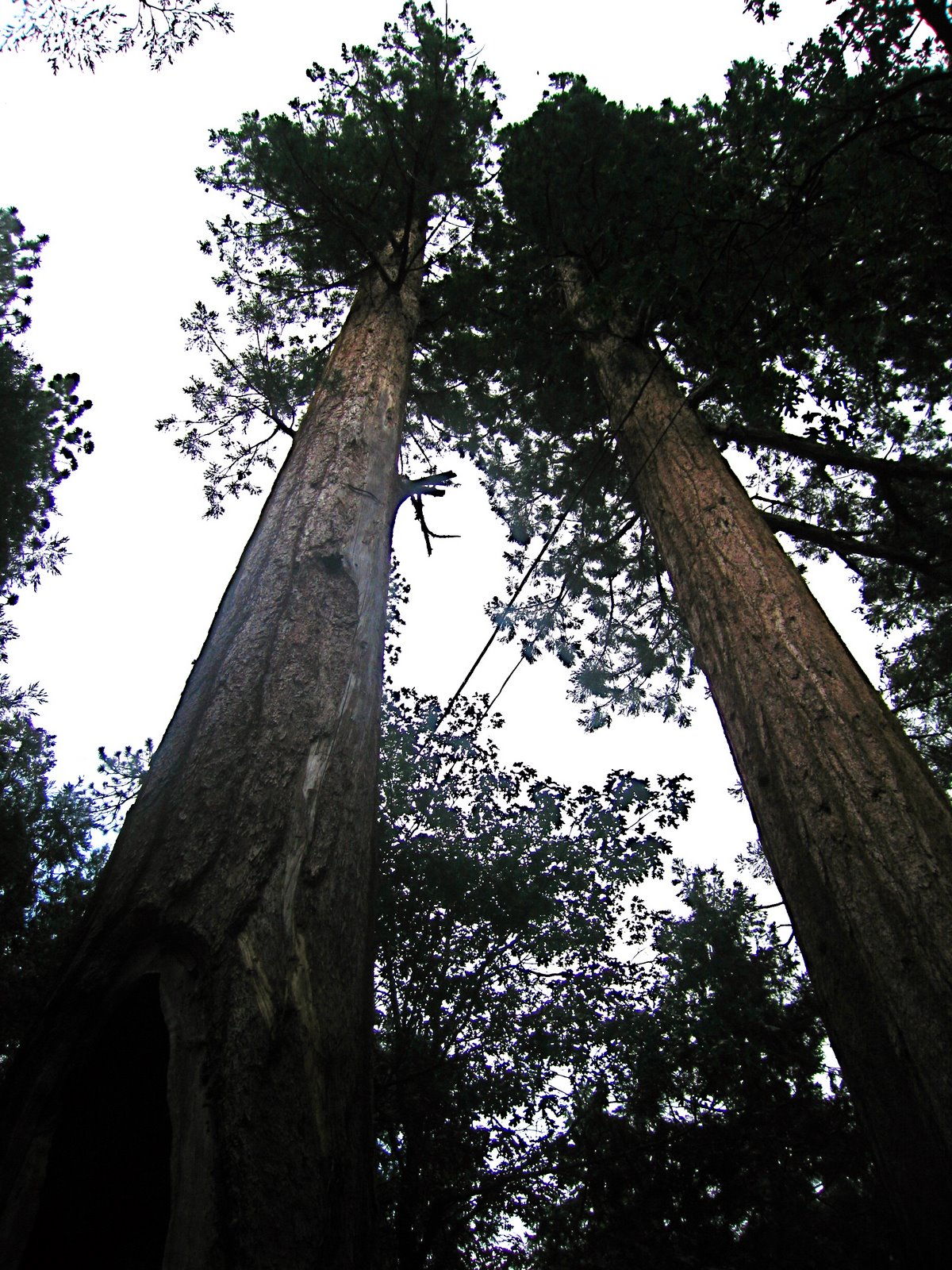 [sequoia+national+5.jpg]