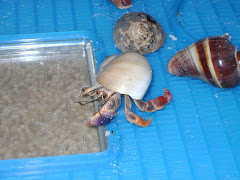 Emma's Hermit Crabs