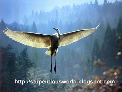 Cool Birds Photos