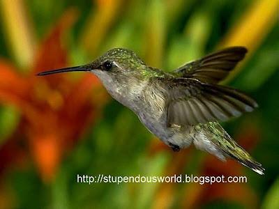 Wonderful Birds images
