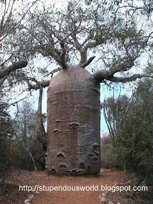 Unusual Amazing Pictures of Tree