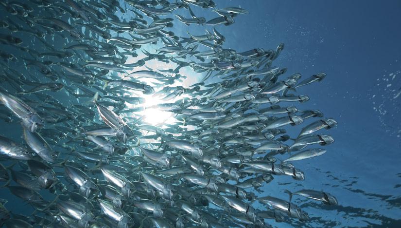 ocean fish zoom