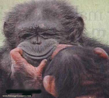 http://4.bp.blogspot.com/_AKLQ1XuT_nU/ST6TwKcjAvI/AAAAAAAAAUM/kfJiKsOn-sc/s400/monkey+smile.jpg