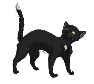 """A Warriors Chance"" Characters Ravenpaw_by_tigon"
