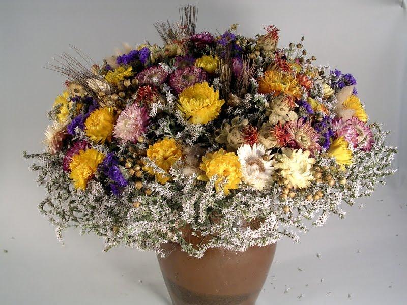 Strohblumen Trocknen rausgeputzt blumenschmuck