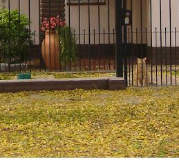 Llego el otoño a mi casa