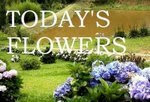 Today´s Flowers