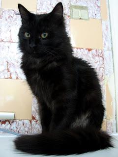 кастрация котка