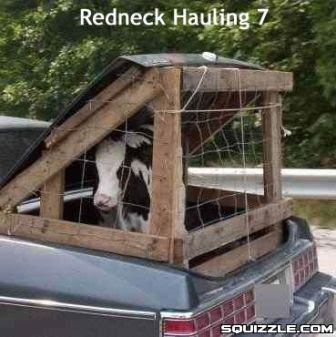 Redneck Cow Trailer