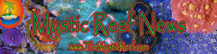 Mystic Reef News