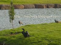 Birds in Pu La Deshpande park