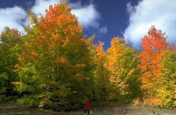 [Autumn+trees+horizontal.bmp]
