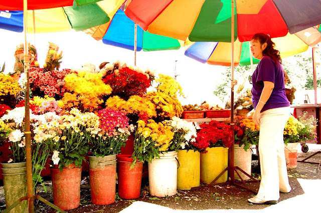 malaysia flowers
