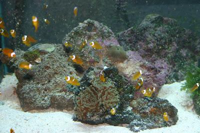 Aquatic jungles lexington home of dustin 39 s fish tanks for Dustins fish tanks