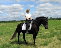 Black Quarter Horse
