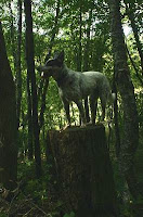 Blue Heeler on a Tree Stump on the Trail