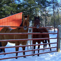 Horses Gathered at Pasture Fence