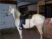 Well-Fitted Tucker Saddle on Short-Backed Horse