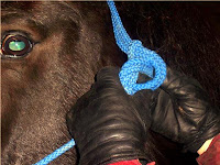 Step 3: Tying a Rope Halter