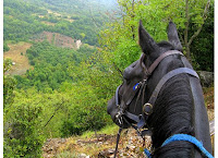 Maremman Horse Overlooking Tuscan View