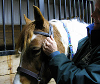 Fitting a Bridle to a Horse: Browband