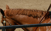 Banded Mane on Quarter Horse