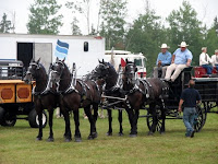 Four-Horse Percheron Show Hitch