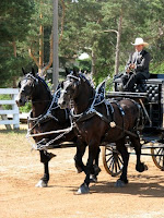 Two-Horse Percheron Show Hitch