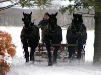Three-Horse Percheron Hitch