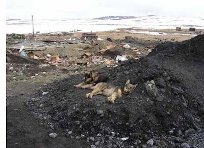 фотографии прииска Восточный 2008-собаки загарают на угле