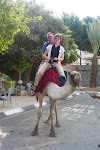 On a Jericho camel