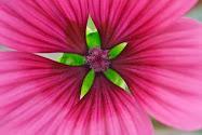 En vakker blomst