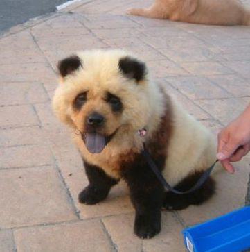 panda+dog+1.jpg