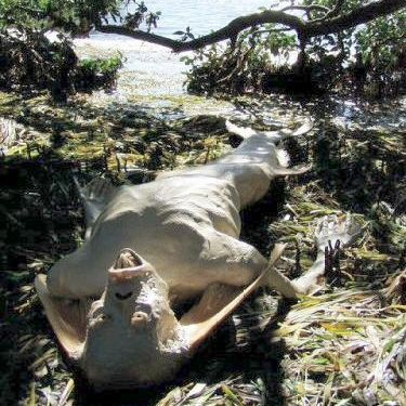 Pictures of Real Mermaids http://sheremainas8.blogspot.com/2010/05/real-mermaid-found-in-malaysia.html