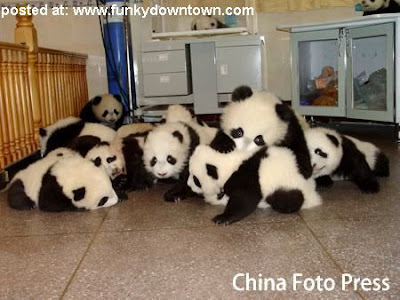 World Baby Names on Kindergarten Of Baby Pandas   Funky Downtown