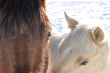 Two of my horses