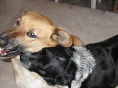 Teddie & Mia