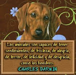 No maltrates a los animales