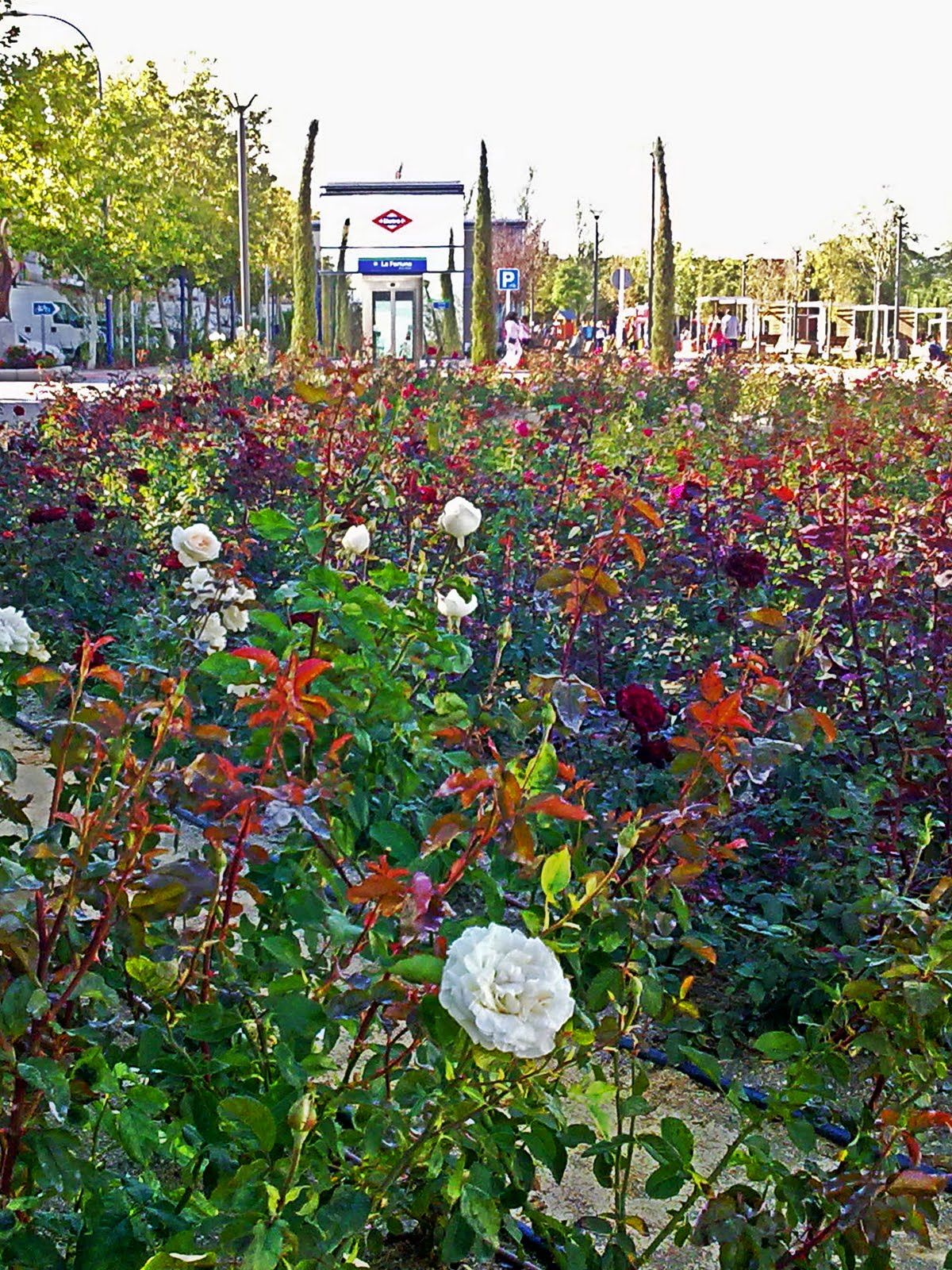 Jardin de rosas for Annette moreno jardin de rosas