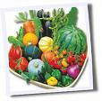 CLICK for more summer vegetables