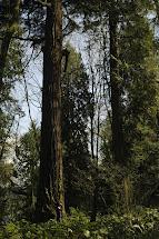Trees in Park in Seattle Washington