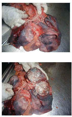 enfermedad hepatico perro: