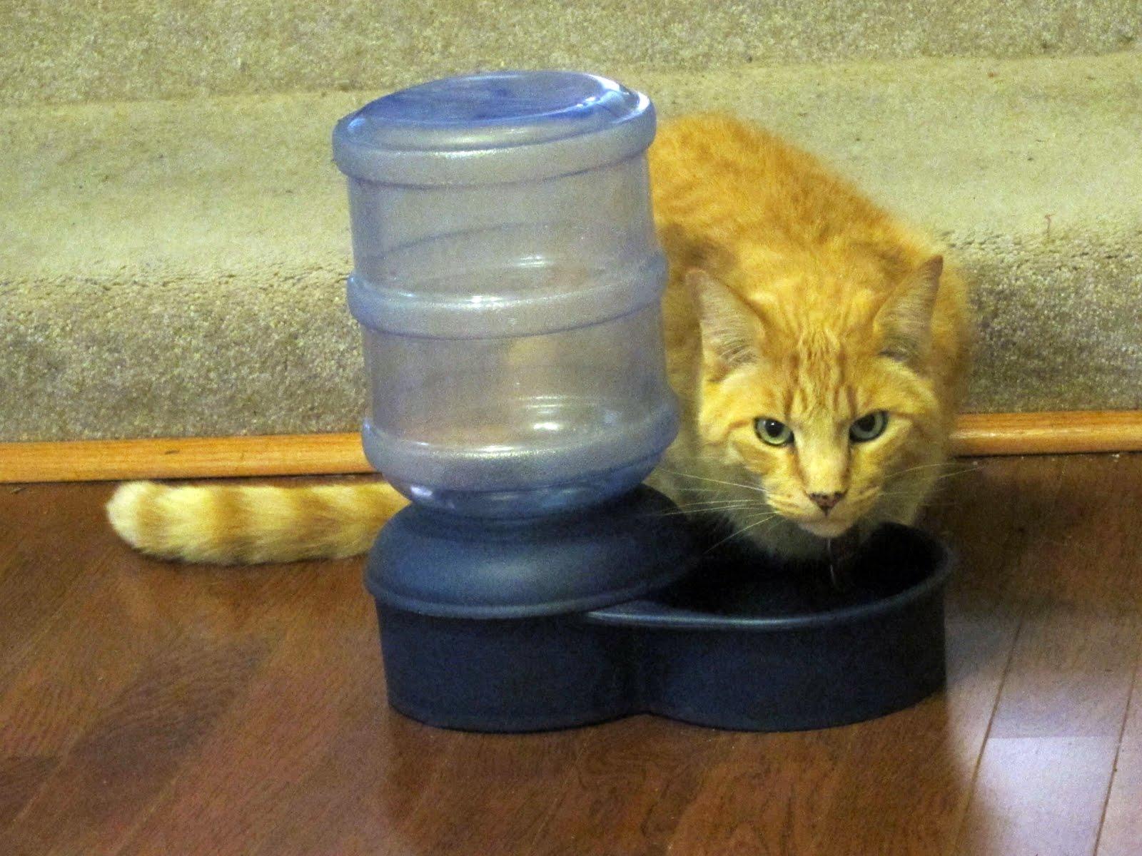 Cat Balances On Edge Of Litter Box