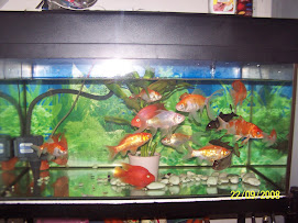 Mai Tomyam Aquarium