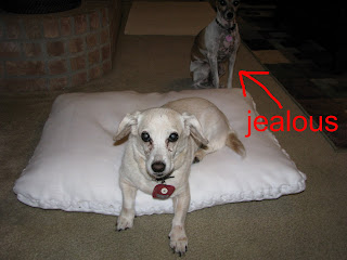 The Undomesticated Wife: Recycle old pillows: no sew dog bed (or floor