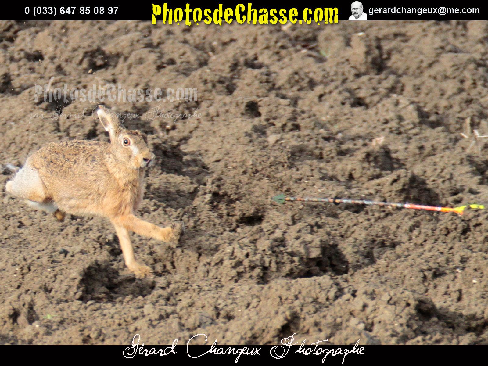 Comment chasser le lievre a l arc - Comment chasser les moucherons ...
