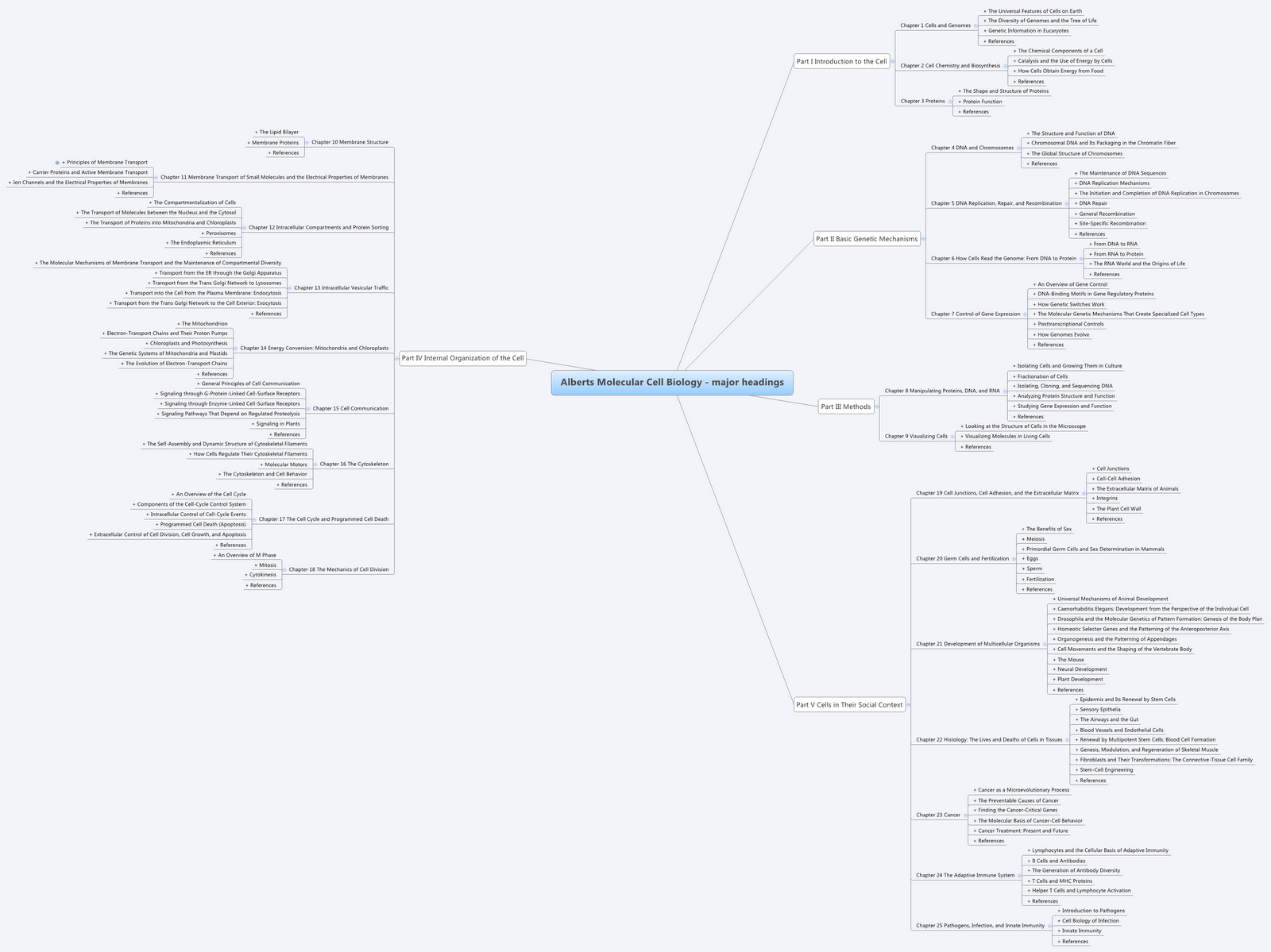 Lowkeytec convert structured text into mind maps in seconds open xmind and paste it at first you should get this sligthly overwhelming mindmap pooptronica Choice Image