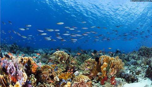 Pemandangan indah bawah laut pulau komodo